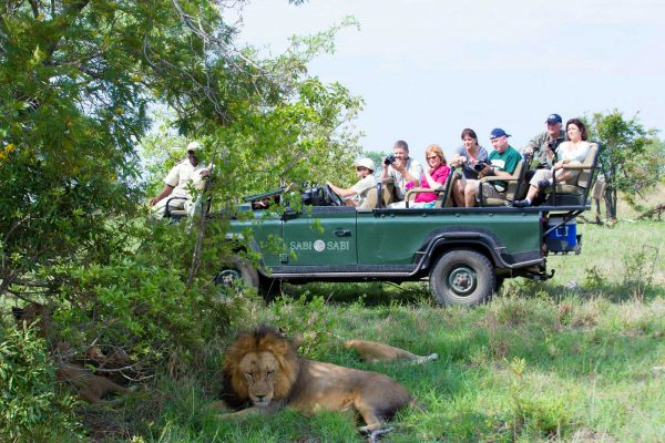 Safari Game Drive | Kruger National Park, South Africa